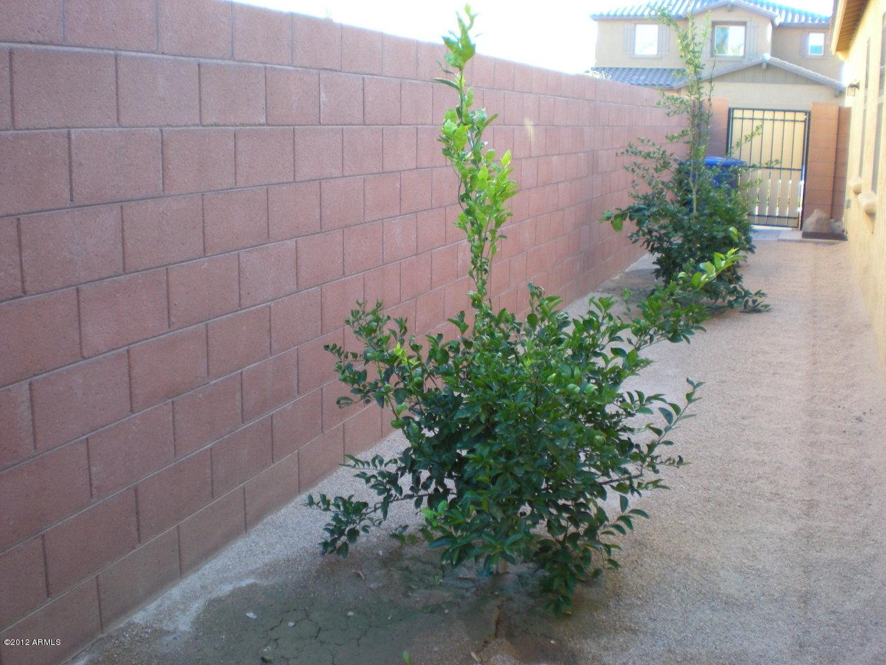 898 E Del Rio St., Chandler, AZ 85225