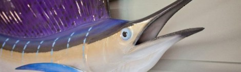 Suddenly: Surprise Swordfish!