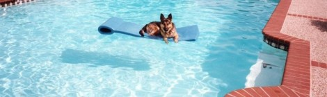 PoolDog Not Included
